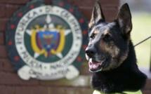 Colombie: Une chienne renifleuse de drogue menacée de mort...