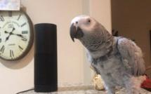 VIDEO - Incroyable, ce perroquet demande à Alexa de jouer de la musique et passe commande sur Amazon...