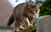 Russie : Un chat recherché pour trafic de drogue