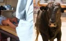 Il prend un stimulant sexuel utilisé pour l'élevage de taureaux, et le pire se produit