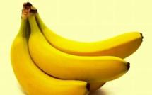 Pour avoir volé 2 bananes: Hassane Samb prend deux ans de prison
