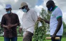 Macky Sall et l'agriculture: la sainte alliance (Par Mounir SY)