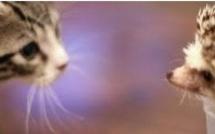 La rencontre entre un chat et un hérisson