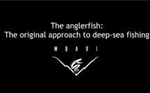 Première vidéo au monde d'une créature filmée dans les abysses