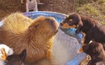 Une retraitée sauve 60 animaux d'une mort certaine ! Cette dame au grand cœur a créé quelque chose d'extraordinaire...