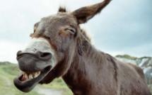 Pour dénoncer l'abattage clandestin des ânes : Les propriétaires comptent battre le pavé lundi